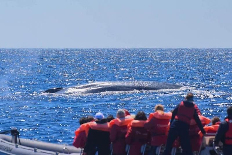 Whale-watching-Azores-portugal