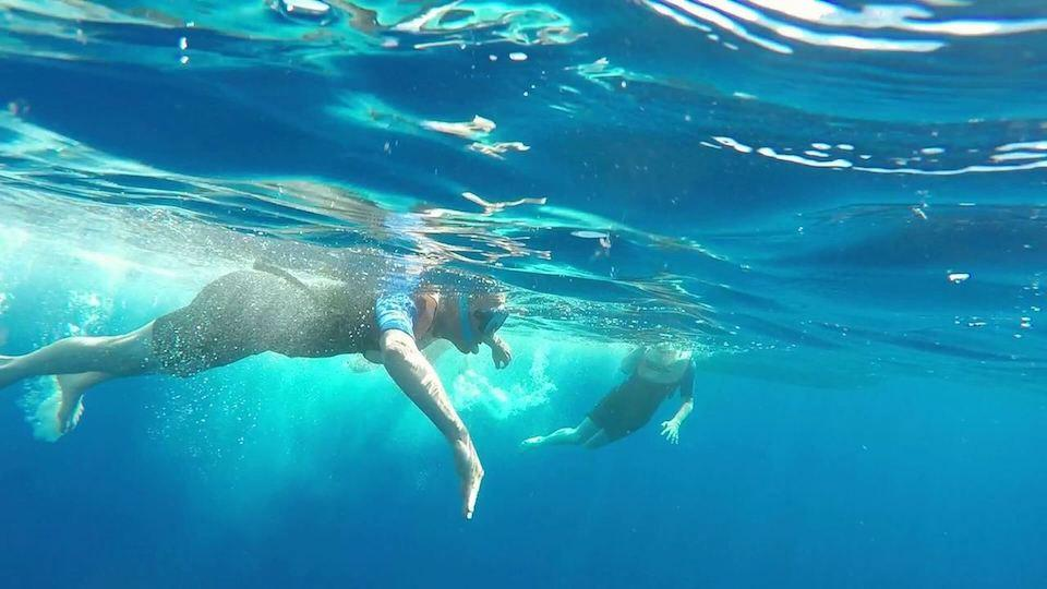 swimming-with-dolphins-azores-portugal