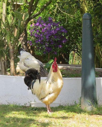silver-coast-farm-holiday-casa-tourica