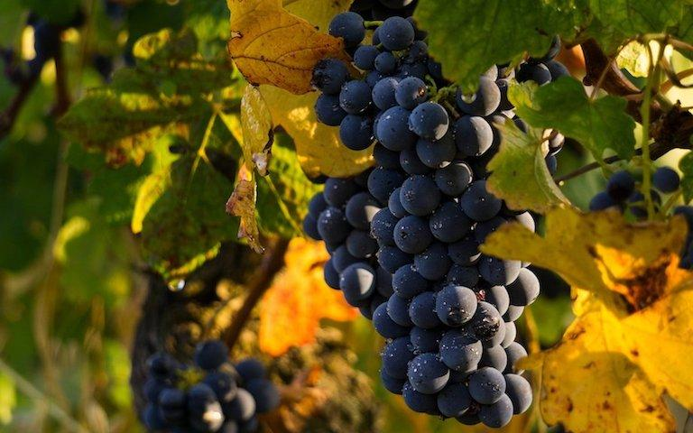 Silver-coast-holidays-vineyard-holiday