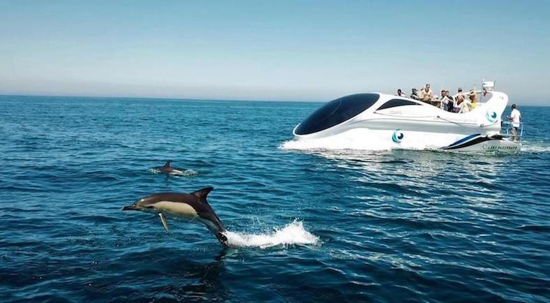Dolphin-watching-Albufeira
