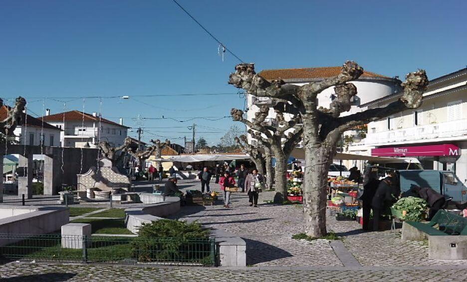 Guia-market